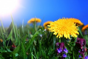 Spring allergy season predicted to be shorter, more intense across northeast Ohio