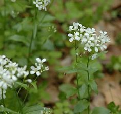 First-ever Spring Native Wildflower Challenge